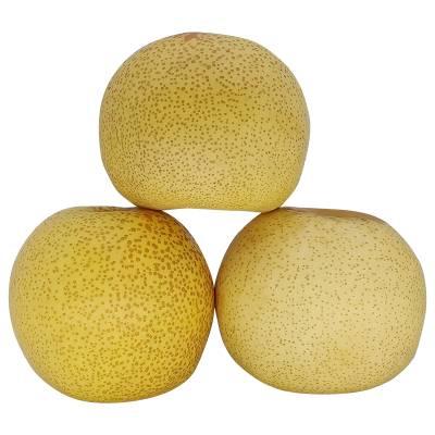 蒋小蒙安徽正宗 砀山酥梨10斤 现摘 新鲜 梨子 水果 贡梨雪梨包邮