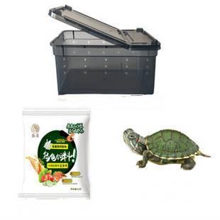 小乌龟+带盖乌龟盒+30天龟粮