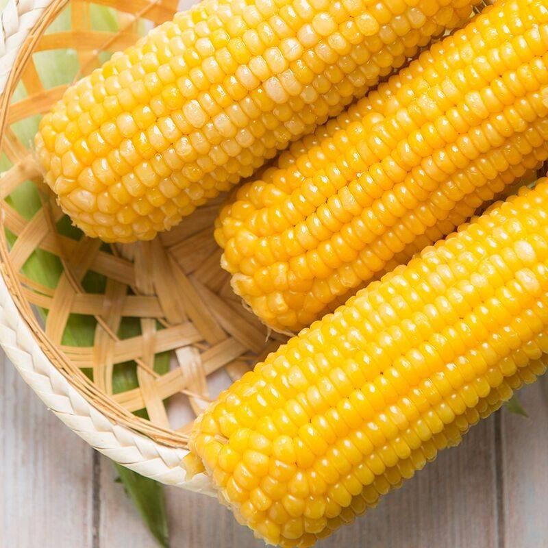 四川新鲜黄糯甜脆玉米现摘现发水果包谷玉米棒子5斤包邮
