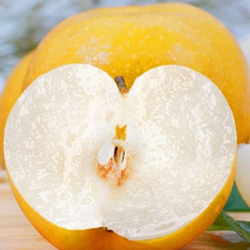 正宗秋月梨新鲜水果5斤优质大果包邮应季山东莱阳梨特产非丰水梨