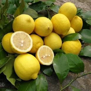四川安岳尤力克黄柠檬买20个送10个包邮