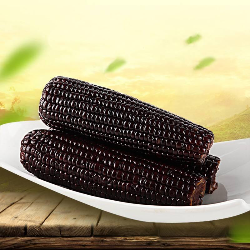东北新鲜黑糯玉米棒非转基因黏玉米10支甜糯摘代餐真空甜粘嫩苞米