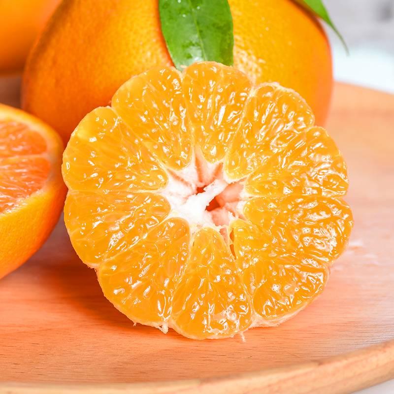 四川青见柑橘新鲜水果非丑橘桔子不知火大果5斤柑橘整箱现摘10斤
